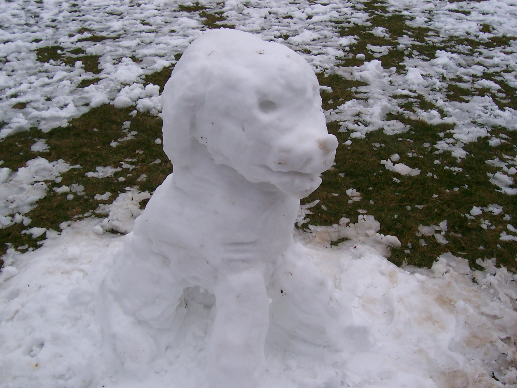 snowdoggie.JPG